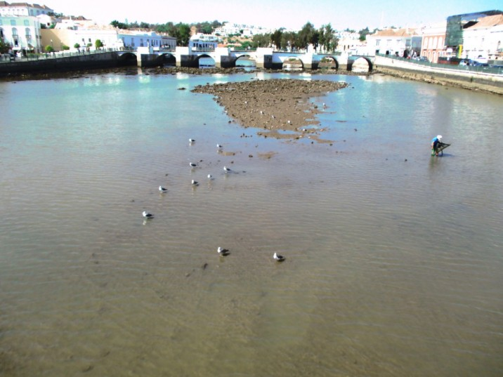 seagulls napping in river